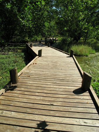 Decked timber walkway to allow pedestrian access through boggy area of nature reserve.